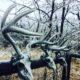 Frozen Deer Scent | Frozen Deer Scents
