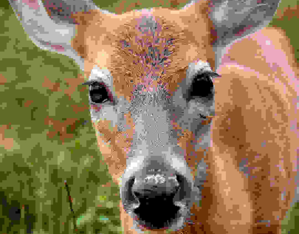 what's the best doe estrus scent? when's the best time to use doe estrus?Heated Hunts High Octane is the best doe estrus scent period.